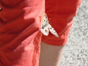 Butterfly Visit