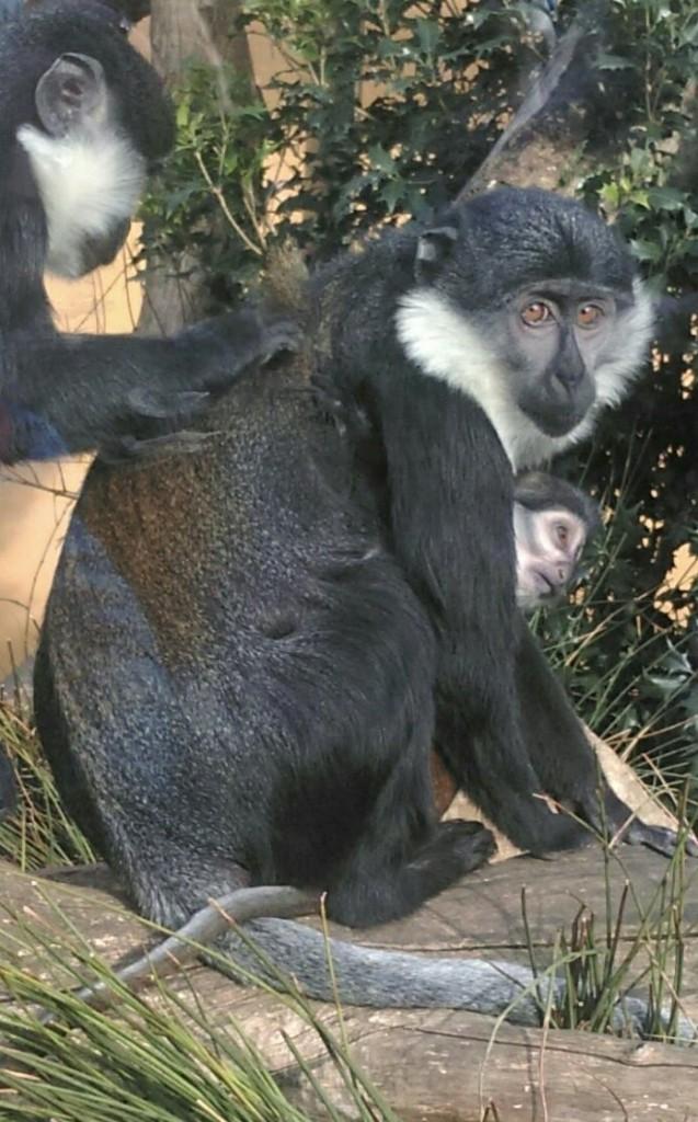 Look Monkey
