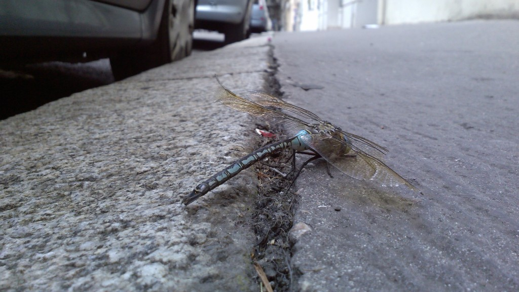 1 Picture 1 Word Dragonfly Landing