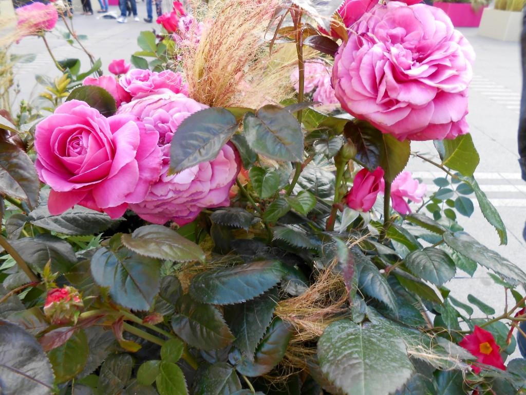 Rose4Tomorrow (13)