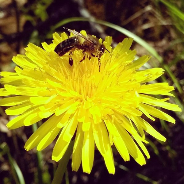 Bee Symphony