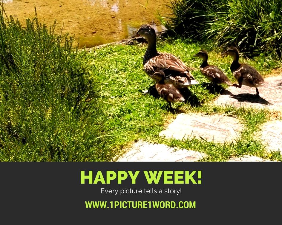 Happy week