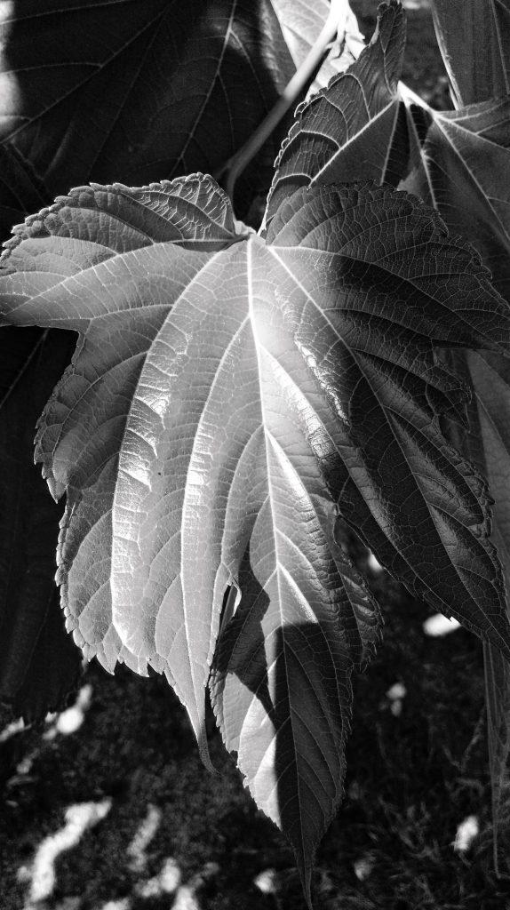 Focus on leaf
