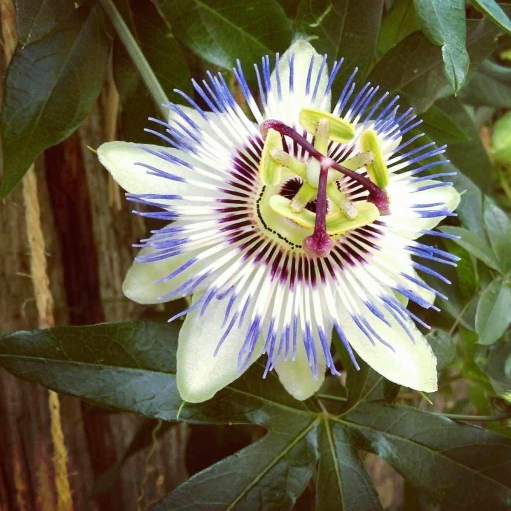 Unusual Flower