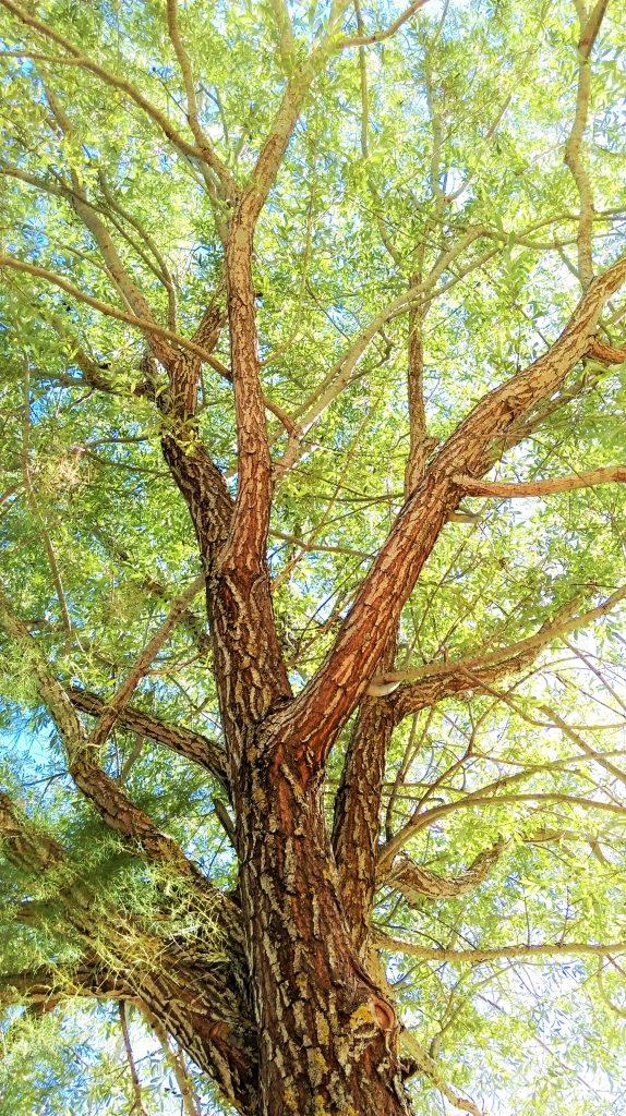 Beyond tree
