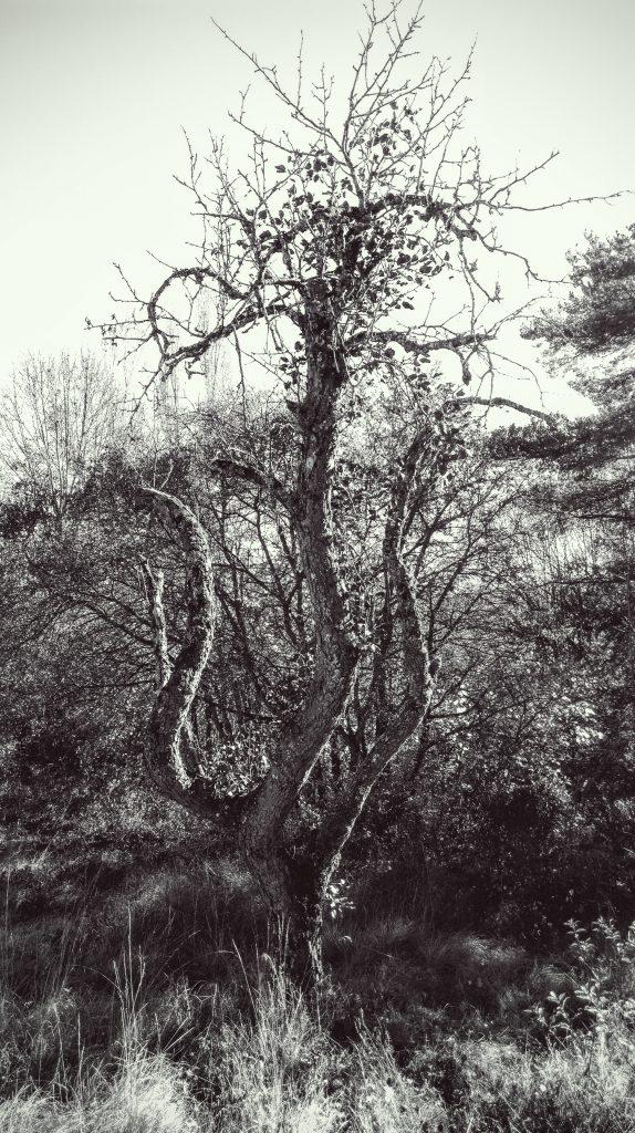 Dance tree