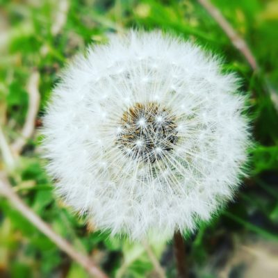 #Makeawish 🌬️ #1P1W #1picture1word 📸  www.1picture1word.com #activeemotion 👁️